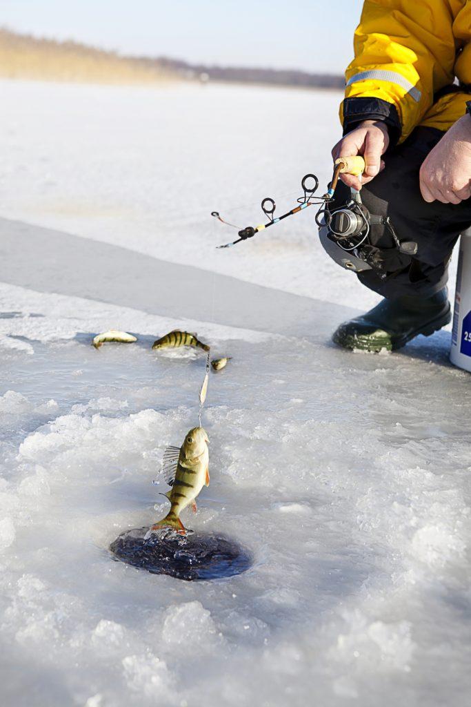 Perchaude: «La pêche sportive n'exerce pas de pression négative»