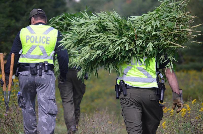 14 personnes arrêtées en lien avec un réseau de production et de vente de cannabis