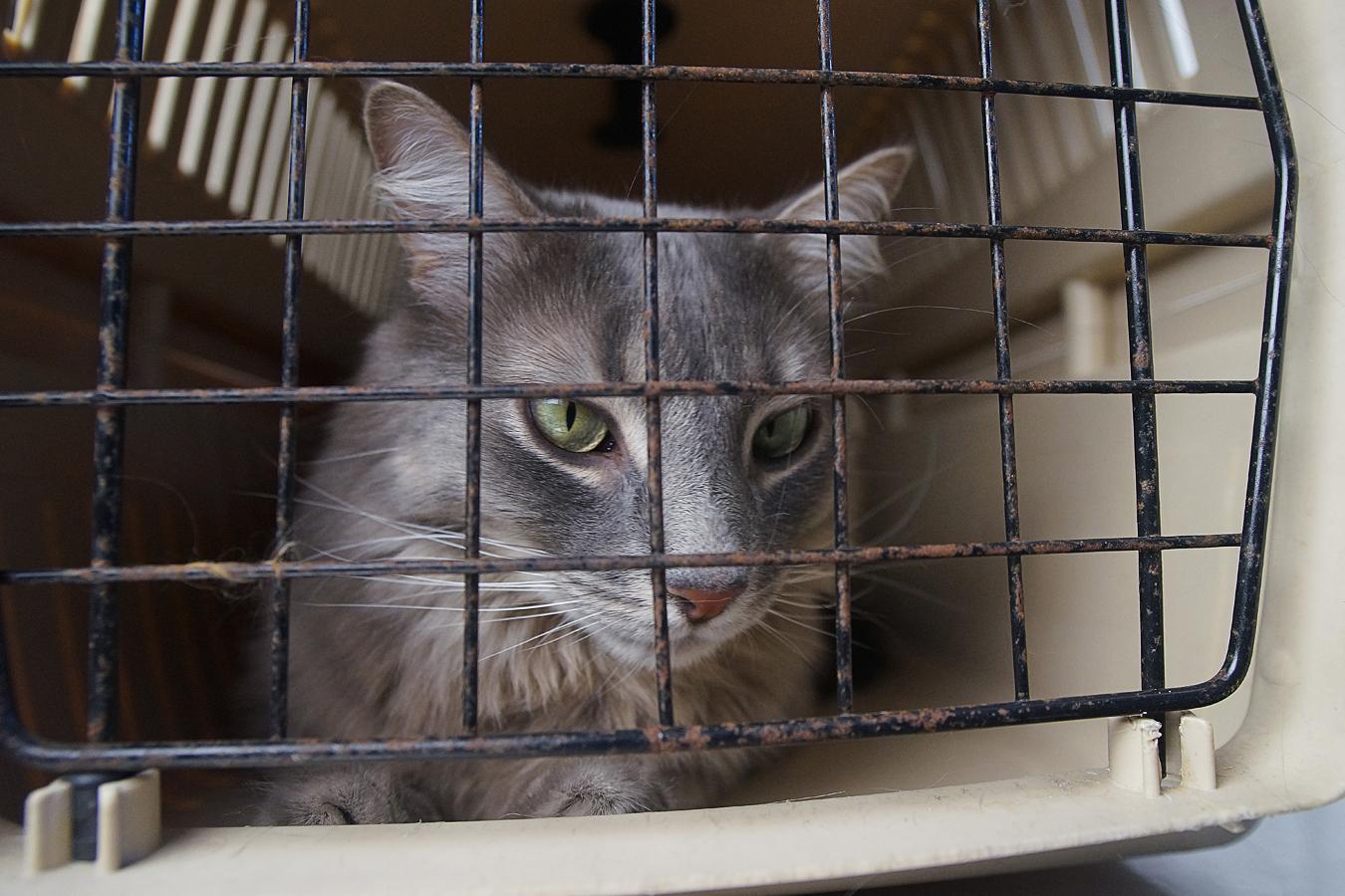 Des cages-trappes à la disposition des citoyens