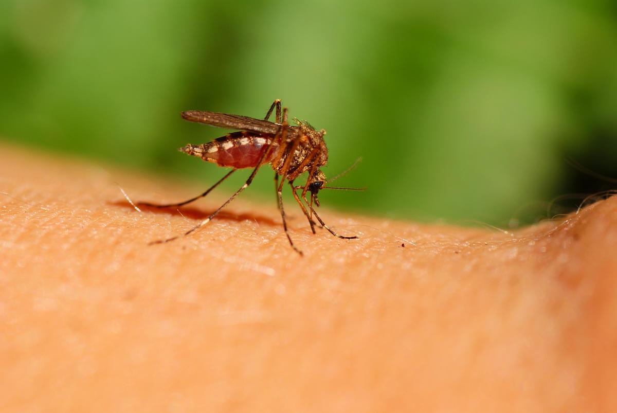 Tiques et moustiques: des mesures simples pour éviter les piqûres