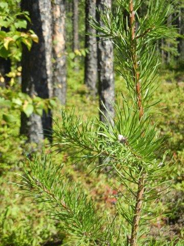 Des audiences publiques pour des projets de réserves en biodiversité