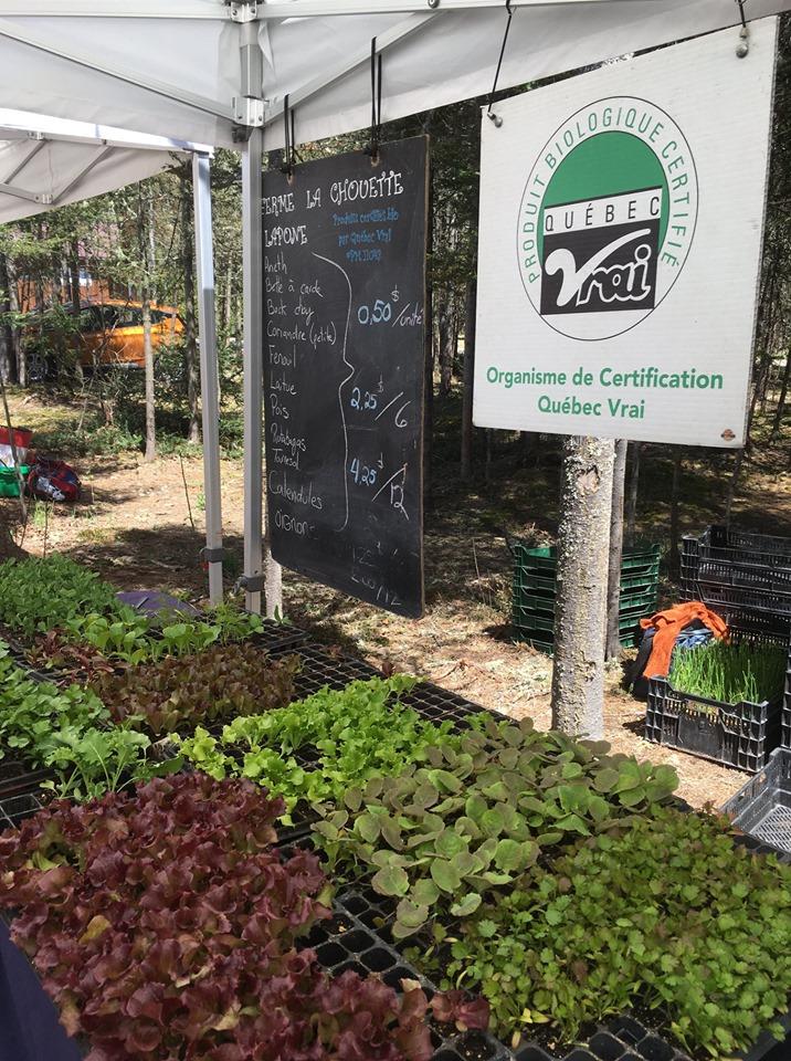Un 10e Bazar végétal à Saint-Élie