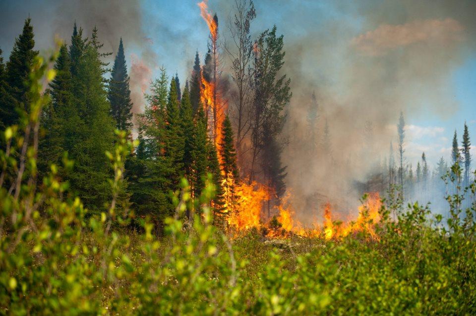 Feu de forêt: prudence pour les prochains jours