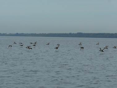 Lac Saint-Pierre : le Plan de gestion intégrée régional (PGIR) déposé