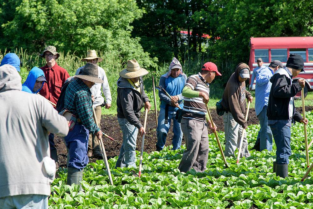 Isolement obligatoire des travailleurs étrangers, Ottawa verse 50 millions