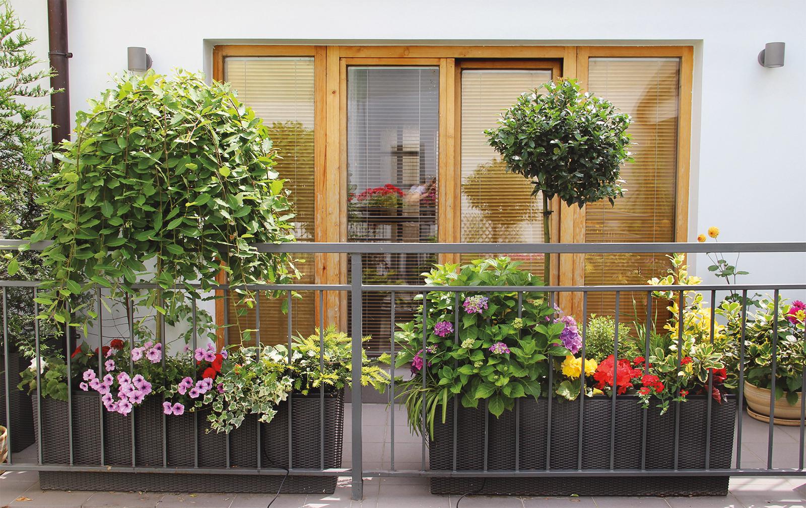 Créer son jardin urbain