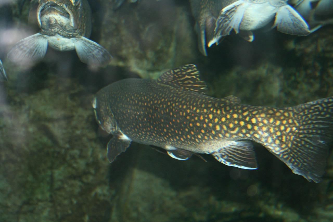 Donner un second souffle au développement de l'aquaculture